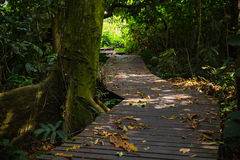 Wooden walkway in forest Stock Photo