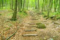 Wooden walkway into the forest Royalty Free Stock Photography