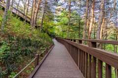 Wooden walkway through a forest Royalty Free Stock Photos