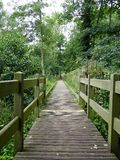 A wooden walkway in the forest. A wooden walkway runs deeper into the forest Stock Photo