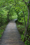 Wooden walkway through forest Stock Photography