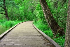 Wooden walkway in the forest royalty free stock photography