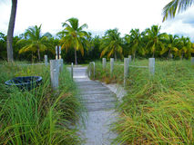 Wooden walkway with grass Stock Image