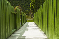 Wooden walkway & green fences. A wooden walkway through green picket fences into foliage Stock Images
