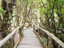 Wooden walkway in the green humid forest. In Chiangmai, Thailand Royalty Free Stock Images