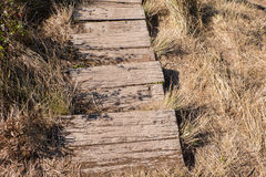 Wooden walkway on the ground among dry grass. (top view Royalty Free Stock Photography