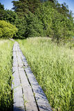 Wooden walkway through high green hay. Lead into forest Royalty Free Stock Photos