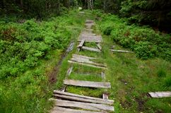 Free Wooden Walkway In A Nature Reserve In A Spruce Forest In The Mountains Over A Waterlogged Peat Bog, Gray Solid Wood Across 1m Wide Royalty Free Stock Photo - 190512085