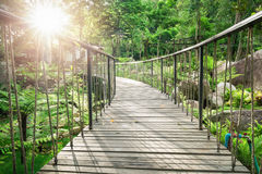 Wooden walkway inside green garden with sunlight. Low view over surface of wooden curved bridge hanging by rope inside green garden with sunlight in afternoon Stock Photos