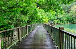 Wooden walkway of the lakeside trail. Around Sun Moon Lake in Taiwan with  verdant environment royalty free stock photography