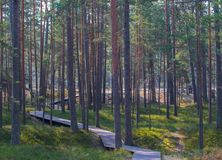 Wooden walkway leading to the sea through a pine forest stock images