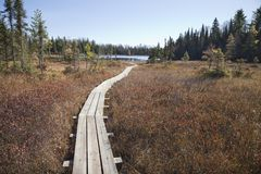 Wooden walkway leading to small trout lake in northern Minnesota stock images