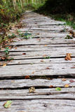 Wooden walkway leads into a wood Stock Photo