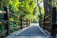 Wooden Walkway in a Lush  Garden Stock Photos