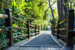 Wooden Walkway in a Lush  Garden Stock Photos