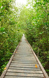Wooden walkway in Mangrove forest Stock Photo