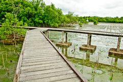 Wooden walkway in Mangrove forest Royalty Free Stock Image