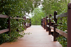 Wooden walkway in the Mangrove forest Royalty Free Stock Photography