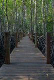 Wooden walkway in the mangrove forest. Wooden walkway in the dark mangrove forest with branches and roots of trees Stock Photography