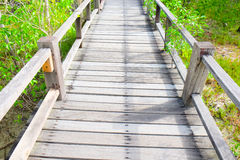 Wooden walkway in mangrove Royalty Free Stock Photo