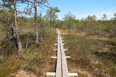 A wooden walkway in the middle of the bog scenic view Stock Image