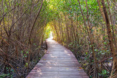 Wooden walkway at nature trail Stock Photo