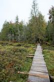 Wooden walkway over bog. A wooden walkway across an Adirondack bog leads in to the fall woods Stock Photography