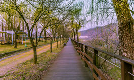 Wooden Walkway in park Royalty Free Stock Photos