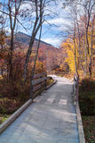 Wooden Walkway at the Peaks of Otter Stock Images