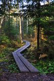 Wooden walkway in pine forest stock photography