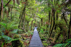 Wooden walkway in the rain forest. New Zealand Stock Photography