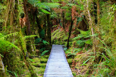 Wooden walkway in the rain forest. New Zealand Stock Images