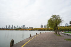 Wooden walkway at riverside in the park royalty free stock images