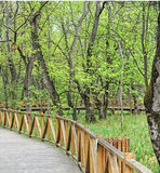 Wooden walkway. Surrounded by trees Stock Images