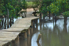 Wooden walkway in swamp Stock Photo