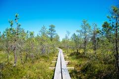 Wooden walkway on the swamp. Viru Raba, Lahemaa park, Estonia Royalty Free Stock Photos