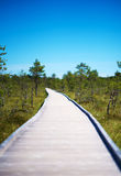 Wooden walkway on the swamp. Viru Raba, Lahemaa park, Estonia Royalty Free Stock Photo