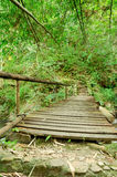 Wooden walkway in Thai forests Royalty Free Stock Photos