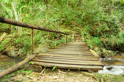 Wooden walkway in Thai forests Royalty Free Stock Photo