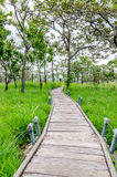 Wooden Walkway thorugh the Siam Tulib garden Royalty Free Stock Images