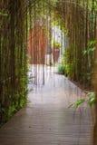 Wooden walkway in tropical botanic garden. Thailand Royalty Free Stock Photo