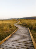Wooden walkway through wildlife conservation area. Stock Image