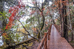 Wooden walkway in winter Royalty Free Stock Image