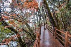 Wooden walkway in winter Stock Images