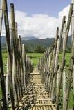 Wooden walkway Stock Photos