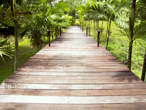 Wooden walkways Stock Image