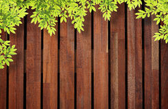 Wooden wall background with tree leaves. Royalty Free Stock Images