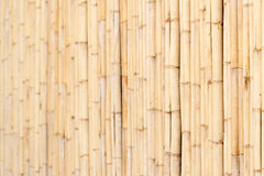Wooden wall of bamboo close-up Royalty Free Stock Images