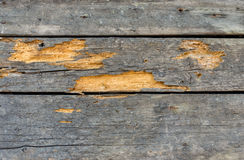 Wooden wall destroyed by weather, time and shipworms Royalty Free Stock Images