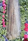 Wooden wall with flowers Royalty Free Stock Image